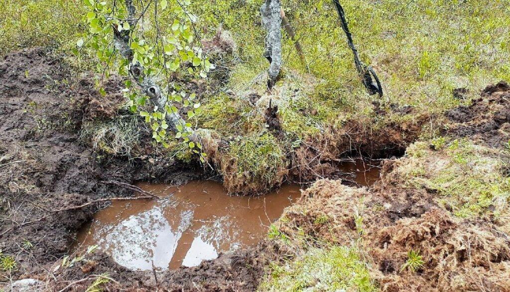 Фото с места обнаружения останков